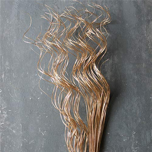 Knud Dried Curly Ting in Gold - 24-28'' Tall