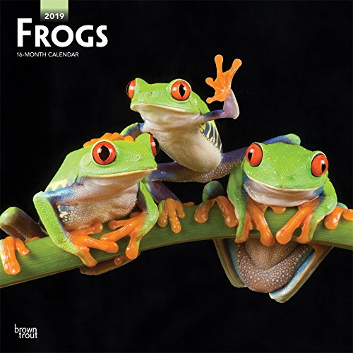Frogs 2019 12 x 12 Inch Monthly Square Wall Calendar, Wildlife Animals (Multilingual - Frog Calendar