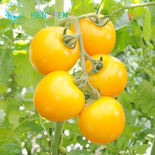 - Brand New! Rare Yellow Pearl Tomato Seeds 30pcs/bag Dwarf Tomatoes Cherry Mini Tomato Bonsai Seeds Vegetable for Garden Plant