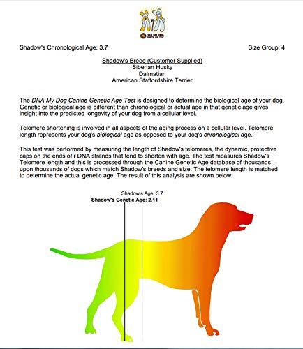 69038884d9298 DNA My Dog NEXTGEN Genetic Age Test