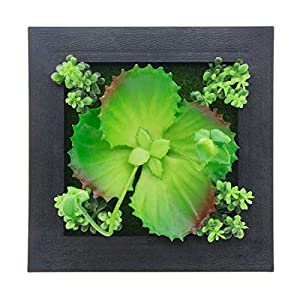Saim Home Decor 3D Wall Artificial Flowers Hanger Wall Plants Arts House Creative Succulent Metope Adornment Decorations Wall Hanging Living Room Bedroom Black Frame 6inch x 6inch 118