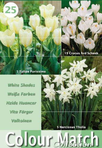 Colour Harmony Blumenzwiebeln, Mix mit 25 Frühlingsblumen, Weiß