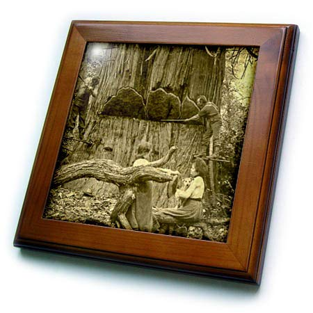 3dRose Scenes from The Past - Stereoview - 16 Feet Across Undercut Giant Cedar Washington State 1902 Lumberjacks - 8x8 Framed Tile (ft_301323_1)