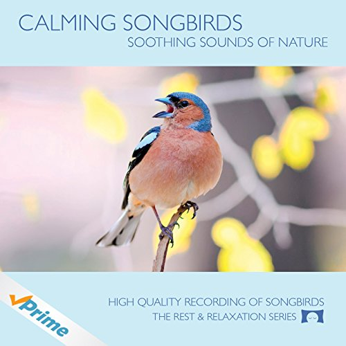 Calming Songbirds Meditation Relaxation Atmosphere product image