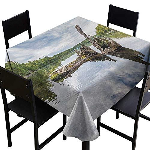 Glifporia Decorative Print Tablecloth Driftwood,Remains of a White Cedar Tree Trunk in The Lake and The Sky Digital Image,Green Pale Grey,W70 x L70 for Umbrella Table ()