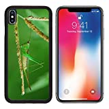 MSD Premium Apple iPhone X Aluminum Backplate Bumper Snap Case Taken in the morning when the locusts ate IMAGE 19486730