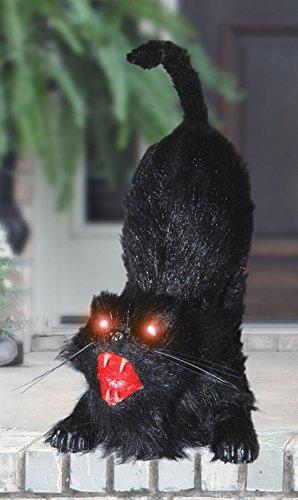 Shindigz Animated Cat - ST]()