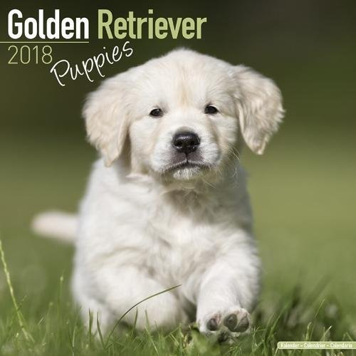 Golden Retriever Puppies Calendar - Dog Breed Calendars - 2017 - 2018 wall Calendars - 16 Month by Avonside