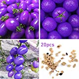 Tomato Seeds Vegetables Seeds Purple Tomato Seeds