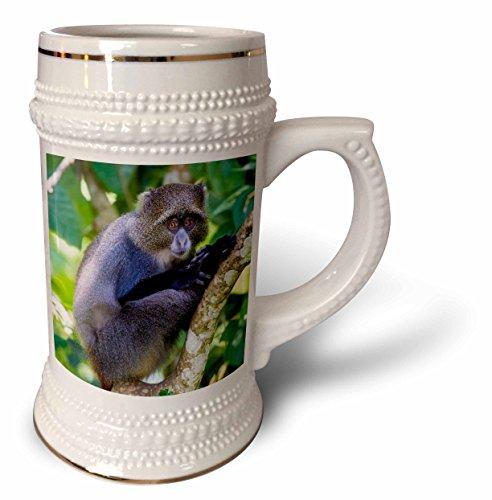 3dRose Danita Delimont - Primates - Africa. Tanzania. Blue Monkey sitting in a tree at Arusha NP. - 22oz Stein Mug (stn_276574_1)