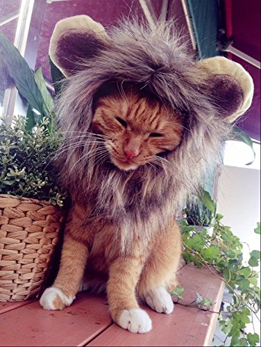 Itplus Pet Cosplay Costume Adjustable Lion Mane Wig Hat for Cat or Small Dog Puppy Hair Accessories Dress up with Ears Christmas Party Festival by Itplus (Image #7)