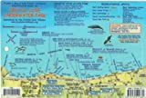 Crystal Cove Underwater Park Newport Beach California Map & Kelp Forest Creatures Guide Franko Maps Laminated Fish Card