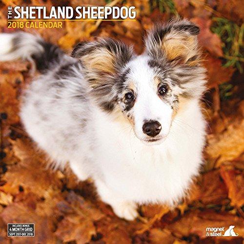 Shetland Sheepdog 2018 Traditional Wall Calendar