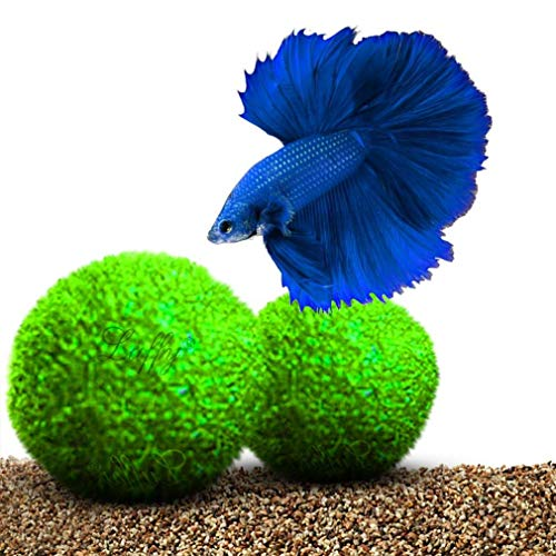 Luffy Guppy Moss Balls, 1.5 Inches, Vibrant Green Marimo Moss Balls, Beautiful and Low Maintenance Live Aquatic Plants, Ideal for Guppies, Mollies, and Swordtail Fish 2 Pack