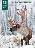 Winter Wildlife Holiday Card Assortment by Sierra Club