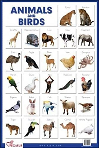 Buy Animals Birds Thick Laminated Educational Chart Book