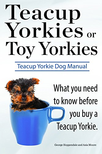 Teacup Yorkies or Toy Yorkies. What you need to know before you buy a Teacup Yorkie. Ultimate Teacup Yorkie Dog (Yorkie Terrier Teacup)