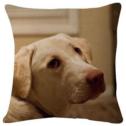 Amazon.com  labrador dog face eyes Animal - Throw Pillow Case ... 5e246d48d397