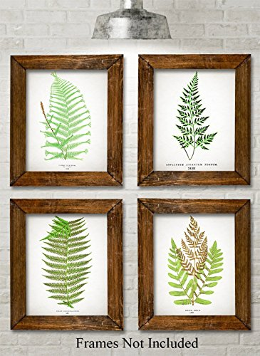 Antique Fern Botanical Prints - Set of Four Photos (8x10) (Antique Four Poster)