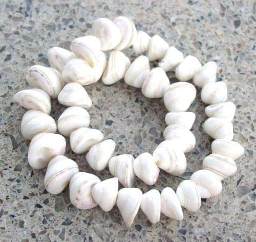 Pendant Jewelry Making Graduated Natural White Tan Ringed Polished Whole Cone Shell Stand Beach Beads