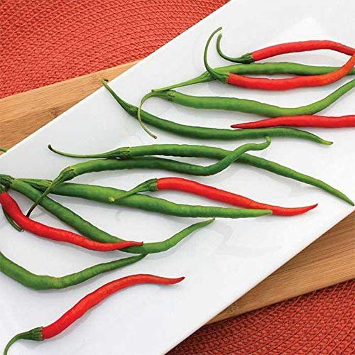 Gong Bao F1 Hybrid Hot Pepper Seeds - eaten fresh, dried or used in Chinese dish(10 - Seeds)