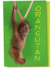 Tree-Free Greetings EcoNotes 12-Count Notecard Set with Envelopes, 4 X 6-Inch, Orangutan Themed Wildlife Art (66769)