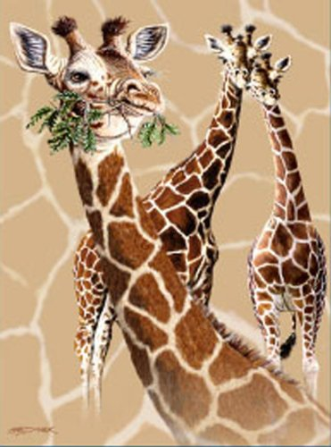 Signature Collection 3 Giraffes Soft Plush Queen Size Blanket