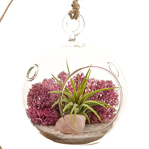 Mini Air Plant Terrarium with Dusty Rose Moss, Natural White Sand & Rose Quartz/3'' Round by Bliss Gardens