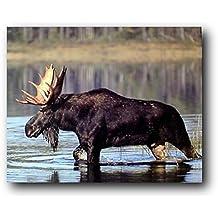 Large Moose Crossing Lake G Sanker Wild Animal Nature Art Print Poster (16x20)