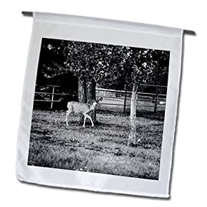 Jos Fauxtographee Realistic - A Black and White of a deer that has been posturized strutting through a yard - 12 x 18 inch Garden Flag (fl_64575_1)