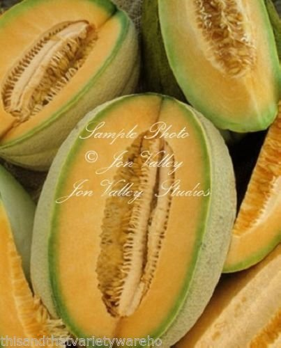 Hales Best Cantaloupe Seeds Sweet Aromatic Melon Early Producer Market or Home (Hales Best Cantaloupe Seed)