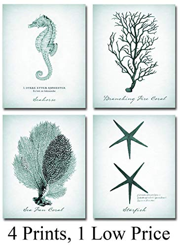 Coral, Starfish, Seahorse Prints - Set of Four Photos (8x10) Unframed - Makes a Great Gift Under $20 for Beach House Decor -