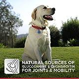 Hills Science Diet Adult Large Breed Dog Food, Chicken & Barley Recipe Dry Dog Food, 35 lb Bag