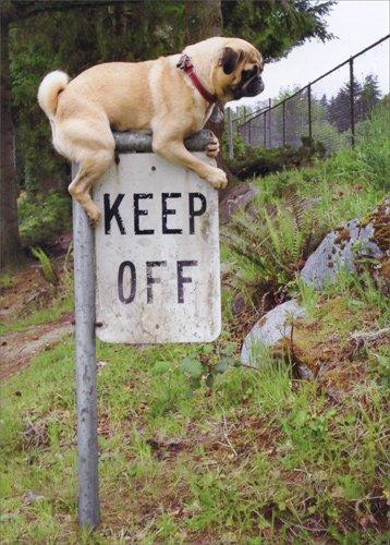 Amazon Pug Keep Off Sign Avanti Funny Dog Birthday Card