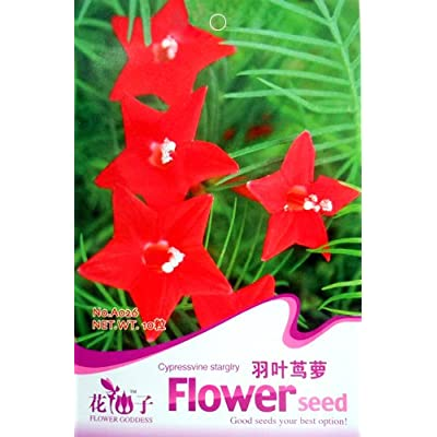 Business Sasha Each Pack 30 Seed RED Cypress Vine Morning Glory Vine Hummingbird Vine (3) : Garden & Outdoor