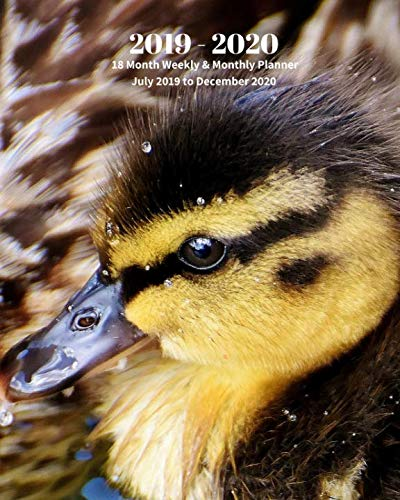 2019 - 2020 | 18 Month Weekly & Monthly Planner July 2019 to December 2020: Mallard Duckling Duck Nature Animal Vol 2 Monthly Calendar with U.S./UK/ ... Holidays- Calendar in Review/Notes 8 x 10 in. (Mallard Ducks Pets)
