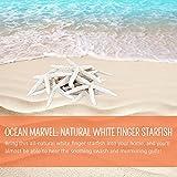 White-Finger-Starfish-Sea-Star