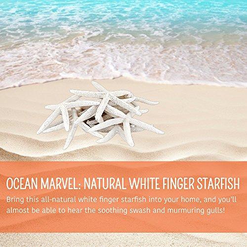 starfish decorative decor pieces