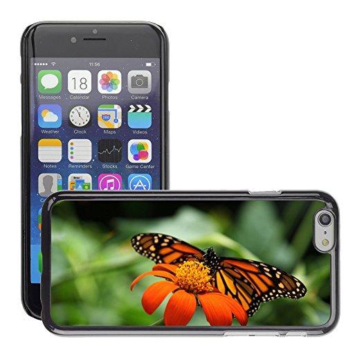 """Bild Hart Handy Schwarz Schutz Case Cover Schale Etui // M00135045 Tier Schöne Monarch Schmetterling // Apple iPhone 6 PLUS 5.5"""""""