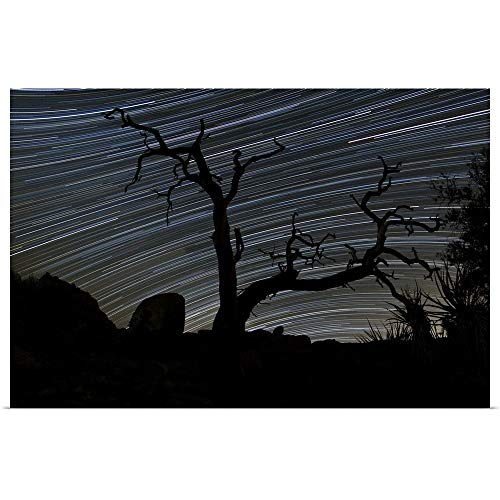 GREATBIGCANVAS Poster Print Entitled A Dead Pinyon Pine Tree and Star Trails, Joshua Tree National Park, California by Dan Barr 18