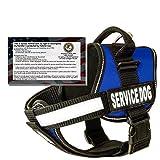 Real Service Dog Vest Harness + 50 ADA Info Cards Kit (Blue - XL (30