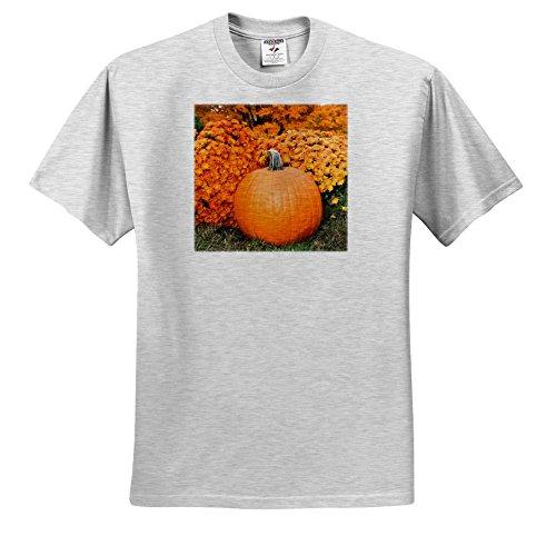 3dRose Danita Delimont - Autumn - Pumpkin and Mums, Fall Foliage, Reading, Massachusetts, USA - T-Shirts - Adult Birch-Gray-T-Shirt 3XL (TS_279052_23) Mums Pumpkins