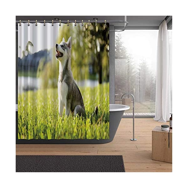 Alaskan Malamute Bath Curtains Shower,Klee Kai Puppy Sitting on Grass Looking Up Friendly Young Cute Animal DShower Curtainsrative for Home,59''W x 71''H 1