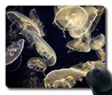 Aquarium Of The Pacific Cool Comfortable Gaming Mouse Pad offers