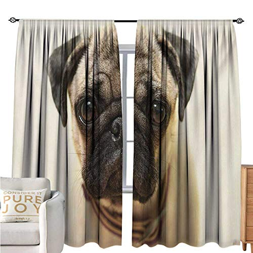 bybyhome PugPolyester curtainPhotograph of a Pug Pure Bred Puppy with a Loose Collar Cute Dog Pets AnimalDrapes for Living Room W72 xL108 Pale Brown Black