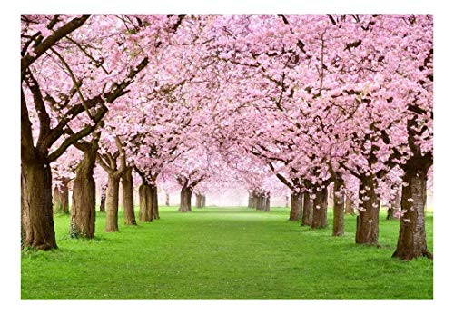 wall26 - Beautiful Cherry Blossom Trees - Landscape - Wall Mural, Removable Sticker, Home Decor - 66x96 ()