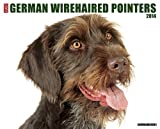 Just German Wirehaired Pointers 2014 Wall Calendar