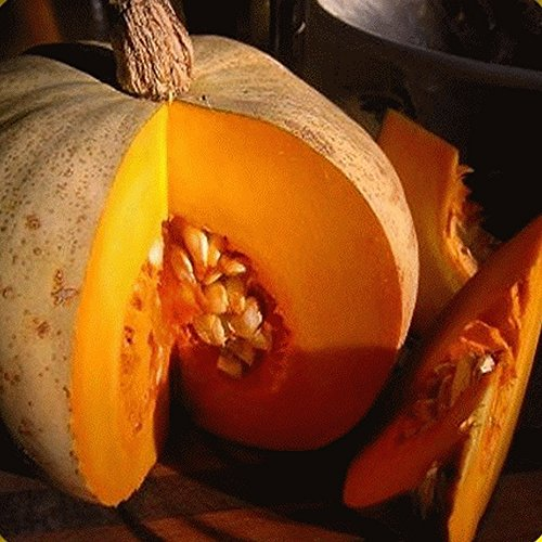 Everwilde Farms - 40 Sweet Meat Winter Squash Seeds - Gold Vault Jumbo Seed Packet ()