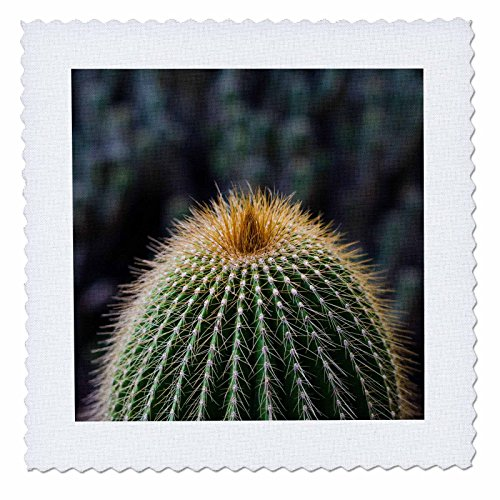 3dRose Danita Delimont - Cactus - Spain, Canary Islands, La Gomera, close-up of cactus. - 16x16 inch quilt square (qs_257881_6) by 3dRose