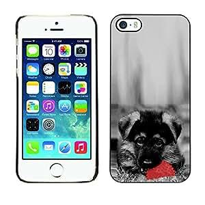 YiPhone /// Prima de resorte delgada de la cubierta del caso de Shell Armor - Cute Dog German Sheppard Puppy - Apple iPhone 5 / 5S